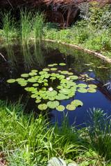Aménagement de jardin - bassin avec des nénuphars et plantes vertes