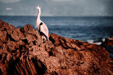 Recess Fitting Bird A bird on the rocks at the beach