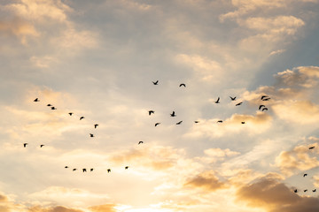 Tuinposter Vogel Sunrise sky with group of birds