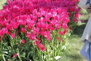 Spoed Foto op Canvas Roze Flower in the botanic garden