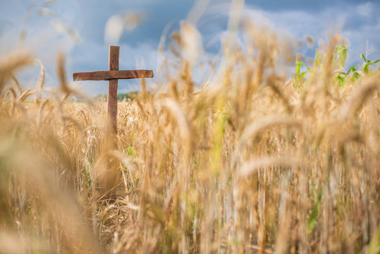 A Christian wooden cross standing on a cornfield amid wheat crop and hay bales