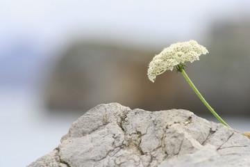 flower in the rock