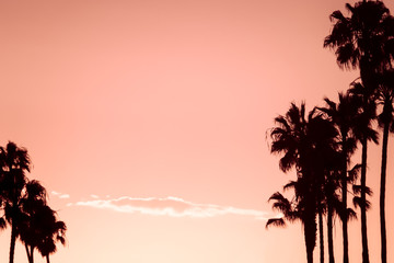 Pink Sky Tropical Vacation Background With Silhouetted Palm Trees