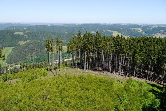 Fichtenwald, Hochwald im Frankenwald und Thüringer Schiefergebirge