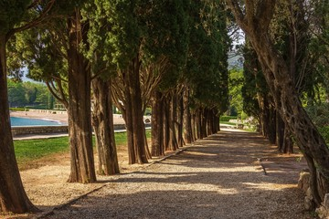 Shady  alley of old trees on the shore of the Bay of Kotor in Montenegro