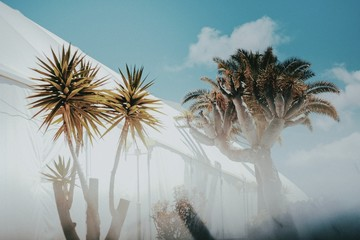 Low Angle View Of Palm Trees Outside Building Against Sky