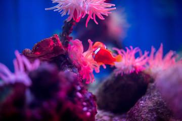 Beautiful Colorful Marine / Aquarium Scene Wall mural