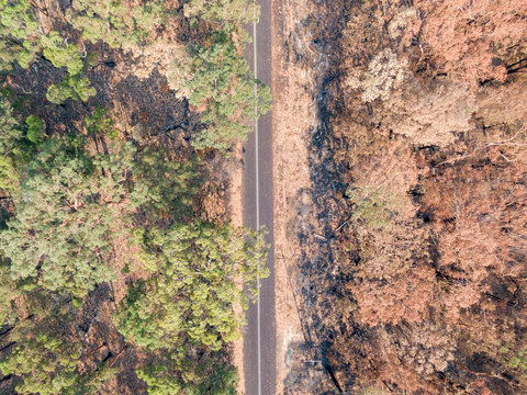 High angle aerial bird's eye drone view of a country road near Sydney, New South Wales, Australia, leading through a partly burnt forest affected by the devastating bushfire season end of 2019.