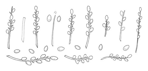 pussy willow set in black and white. Easter plants in black and white line art vector for coloring book and and greeting design