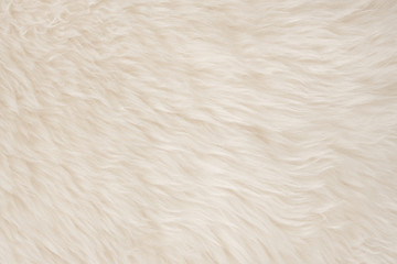 White real wool with beige top texture background. light cream natural sheep wool.  seamless plush...