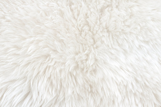 White real wool with beige top texture background. light cream natural sheep wool.  seamless plush cotton, texture of fluffy fur for designers