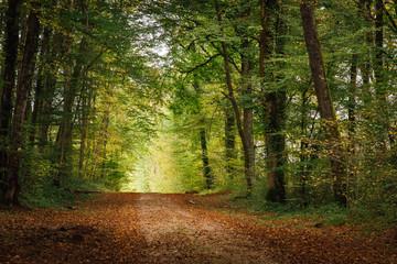Foto auf Gartenposter Straße im Wald un chemin dans une forêt en automne avec une perspective et la lumière au bout du chemin