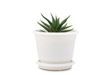 Photo sur Aluminium Cactus Small cactus isolated on white background. Succulents and aloe in colorful white pot.