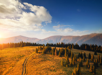 Wall Mural - Peaceful view of mountain landscape with fir forest on a sunny day.