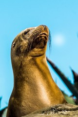LOW ANGLE VIEW OF SEA LION AGAINST CLEAR SKY