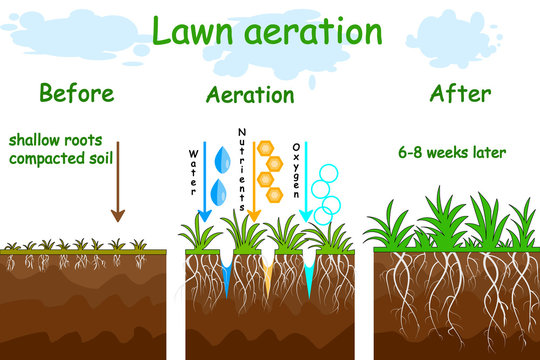 Lawn aeration stage illustration. Before and after aeration. Gardening grass lawncare, landscaping, lawn grass care service. Illustration for article, infographics or instruction. Stock vector