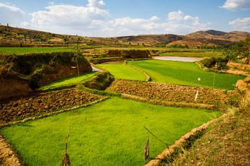 Rice Fields along the RN34 through Central Highlands near Betafo, Madagascar