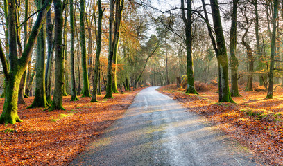 A country lane near Lyndhurst in the New Forest