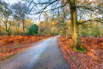 Autumn at Bolderwood in the New Forest