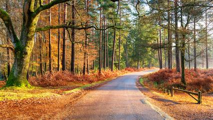 Bolderwood Arboretum Ornamental Drive near Lyndhurst in the New Forest
