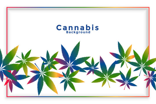 cannabis marijuana leaves in colorful style background