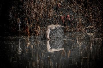 Foto op Plexiglas Zwaan swan on the water