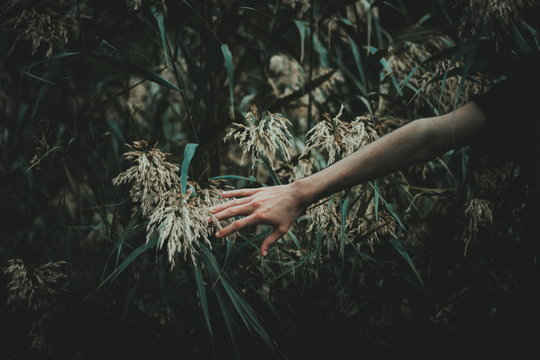Cropped Image Of Hand Touching Plants