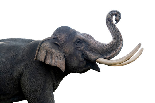 Thailand elephant statue isolated on white background. File contains with clipping path so easy to work.