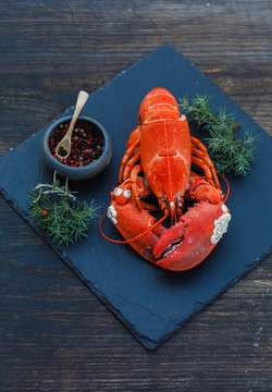 Solted Boiled lobster, small white snails grown on the lobsters shell with juniper twigs and balls of red and black pepper on dark blue wooden rustic background