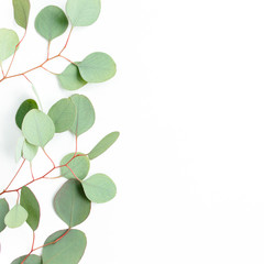 Aluminium Prints India Eucalyptus branch, leaves isolated on white background. Flat lay, top view. floral concept