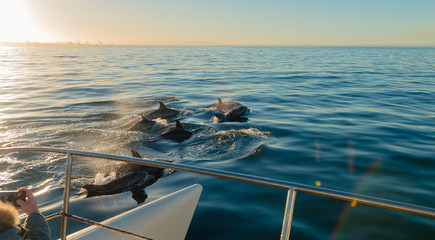 Cropped Image Of Boat Sailing By Dolphins Swimming In Sea
