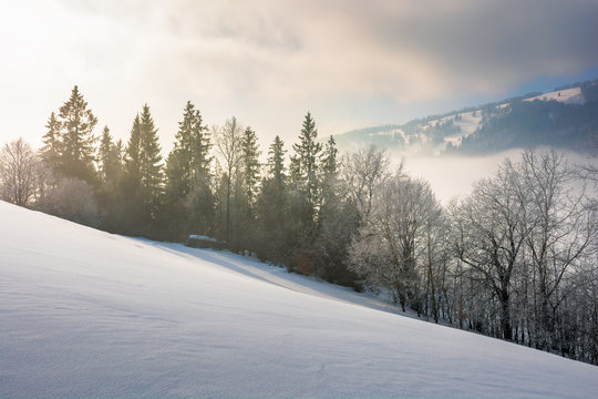 dramatic winter sunrise. trees in hoarfrost on a snow covered slope. clouds and mist floating in the valley. borzhava mountain ridge in the distance. amazing open vistas in gloomy frosty weather