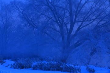Photo sur Aluminium Bleu fonce 冬の雪景色