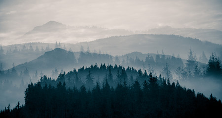 Poster Morning with fog PANORAMIC VIEW OF TREES AND MOUNTAINS AGAINST SKY