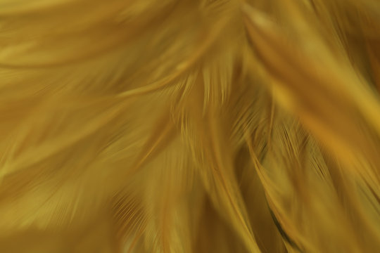 Full Frame Shot Of Yellow Feather