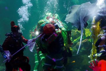 Divers perform underwater Dragon-dance in an aquarium at Seaworld in Jakarta