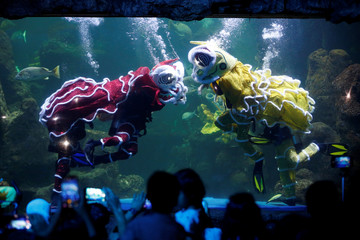 Divers perform underwater Lion-dances in an aquarium at Seaworld in Jakarta