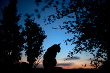 Silhouette Cat Sitting On Retaining Wall Amidst Trees At Dusk