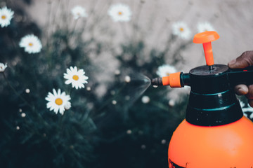 Cropped Hand Spraying Flowers In Lawn