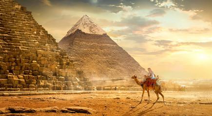 Photo sur cadre textile Chameau Camel near pyramids