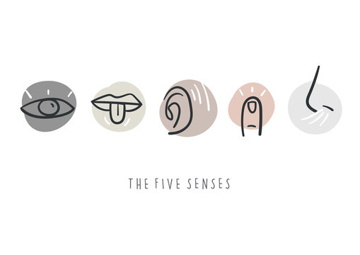 Hand drawn simple icons representing the five senses. Hand drawn doodles.