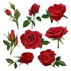 Realistic decorative roses bouquet. Floral red roses bouquets, flowers with leaves and burgeon, flowers blossom bunch isolated vector set. close up natural botanic elements for wedding invitation card