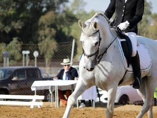 Fototapeta jinete y caballo blanco en evento ecuestre obraz