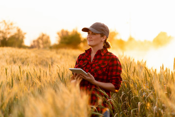 A woman farmer examines the field of cereals and sends data to the cloud from the tablet. Smart farming and digital agriculture. Fotomurales