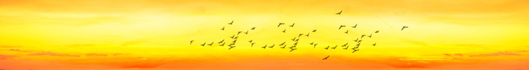 Photo sur Plexiglas Jaune panoramica de un cielo anaranjado por el atardecer