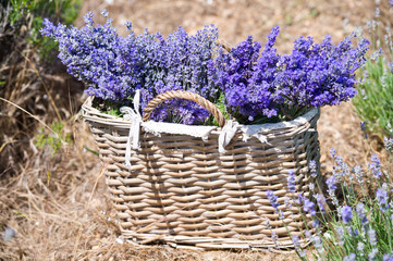Basket with lavender flowers. Aromatherapy. Nature Cosmetics.