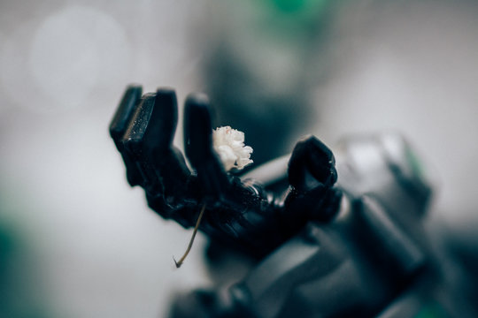 CLOSE-UP OF robot hand holding flower