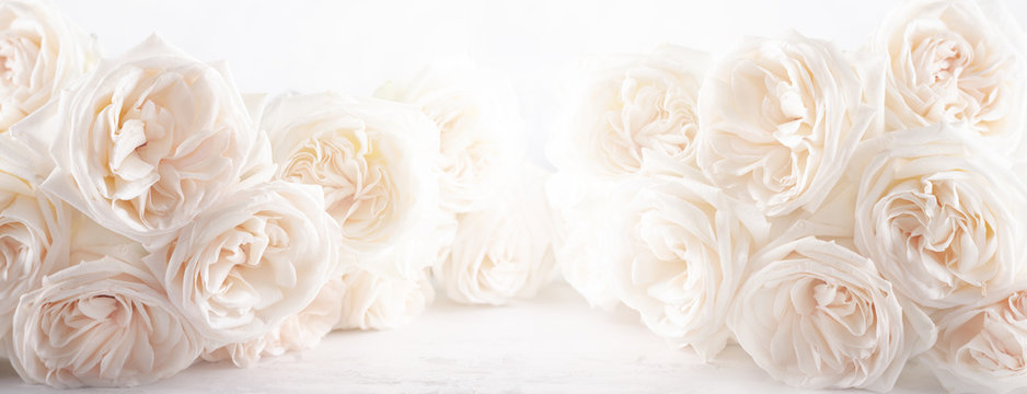 Background of beautiful white  roses flowers .