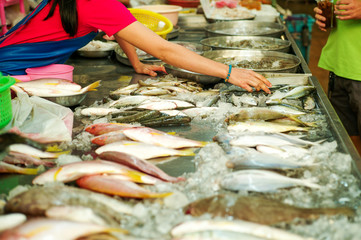 Selective focus on hands of seller pick the raw fresh fish on the tray with blurred crowd of fish in background