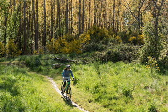 A female, baby boomer cyclist riding a path as it emerges from a forest into a grassy meadow in New Zealand.